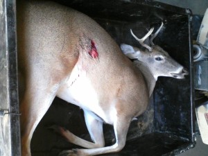 Bill 4 pointer two