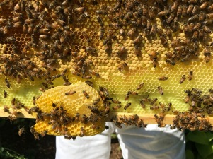 bees8